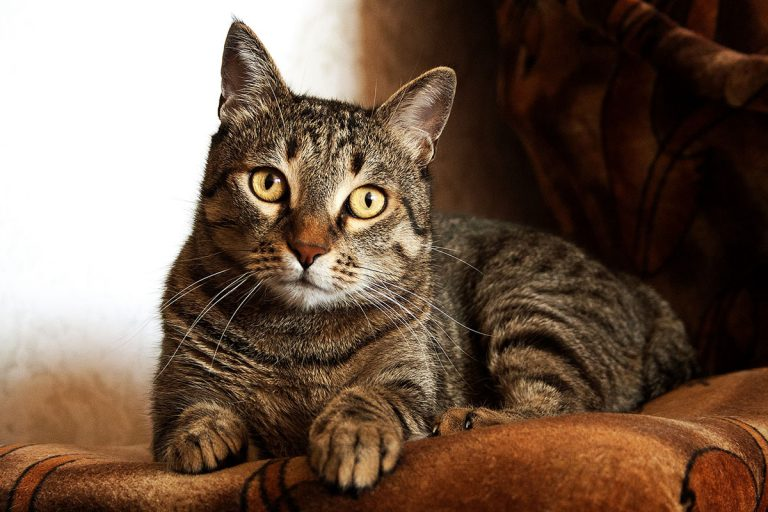 What Is The Best Cat Food For Constipation