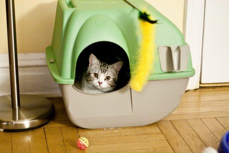 Best Cat Litter Mat – Our Top 5