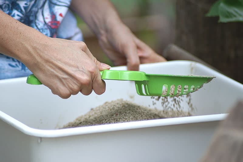 Person sifting cat litter