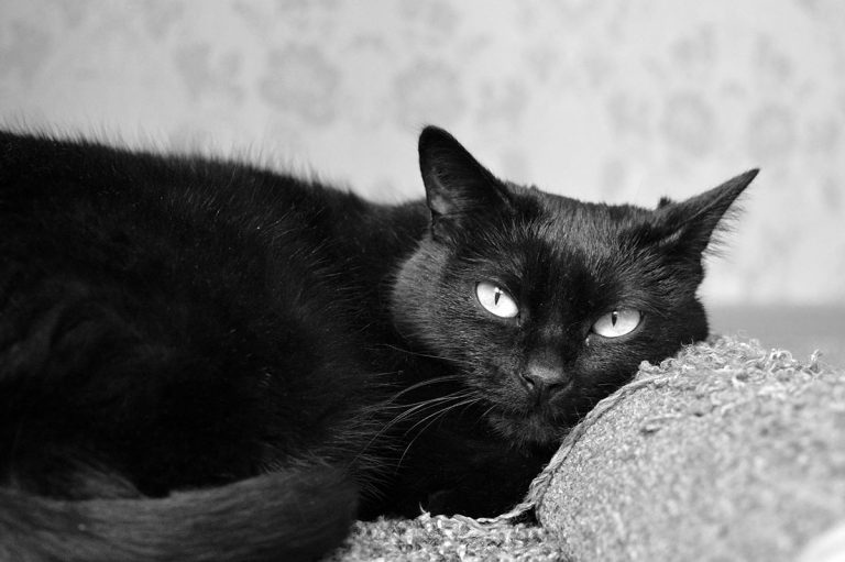 Best Litter Box For Male Cats – Our Top 5