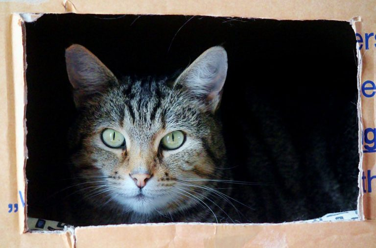 Best Litter Box For Cats That Spray – Our Top 5