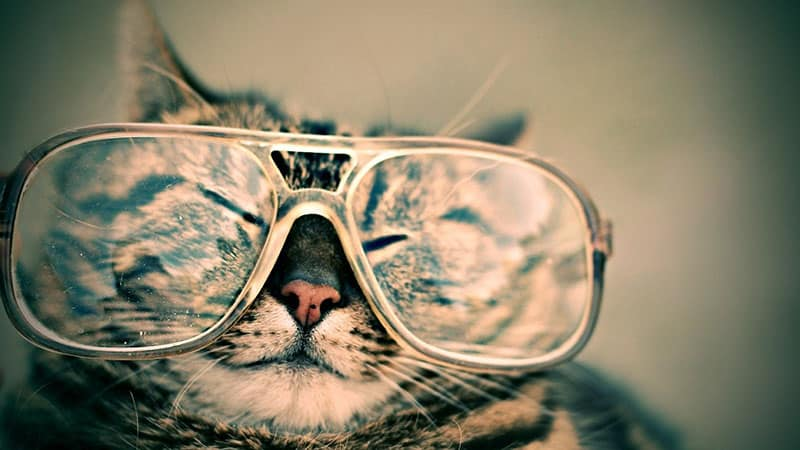 Cat with glasses