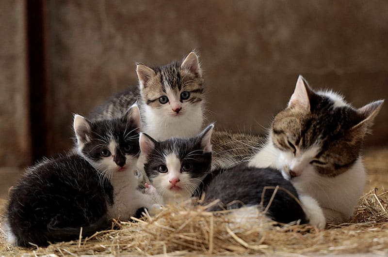A momma cat and her litter