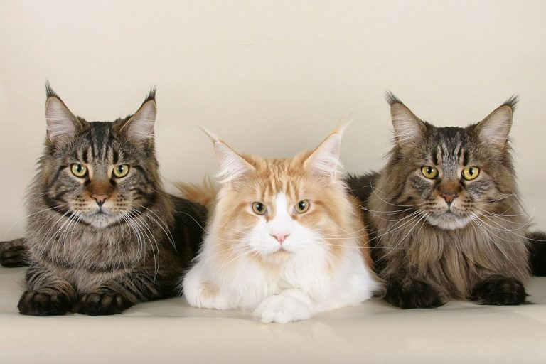 How Many Litter Boxes For 3 Cats