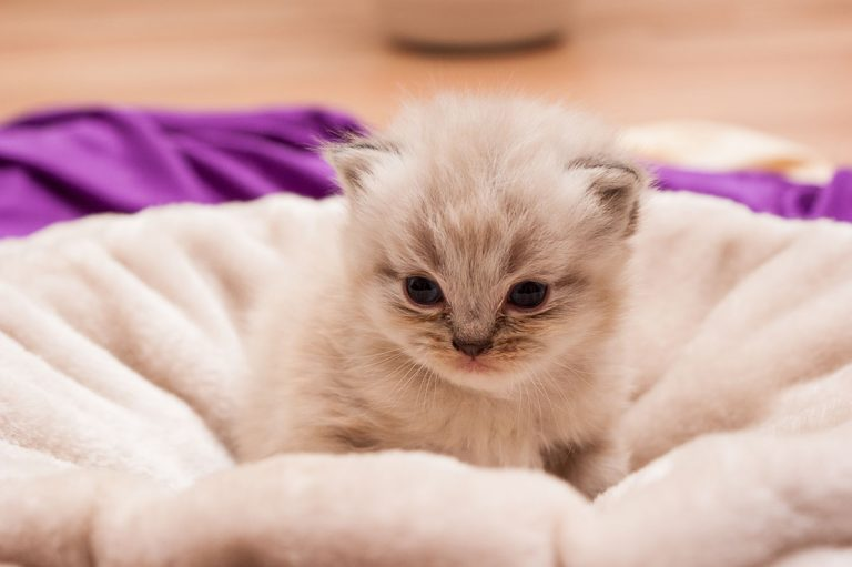 Best Litter Box For Small Kittens – Our Top 5