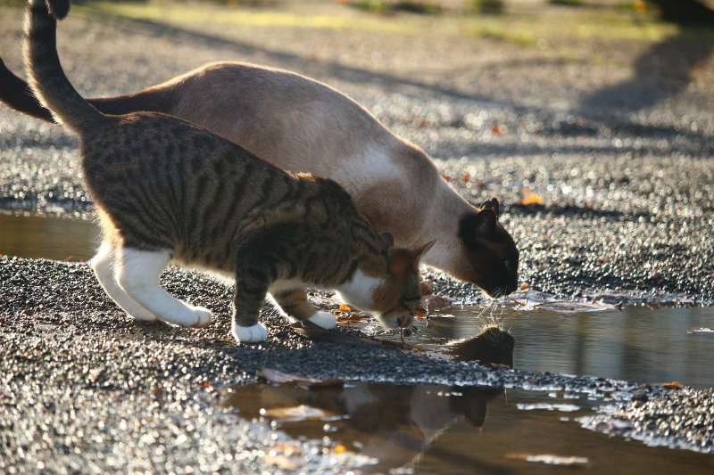 dehydration in cats with kidney disease