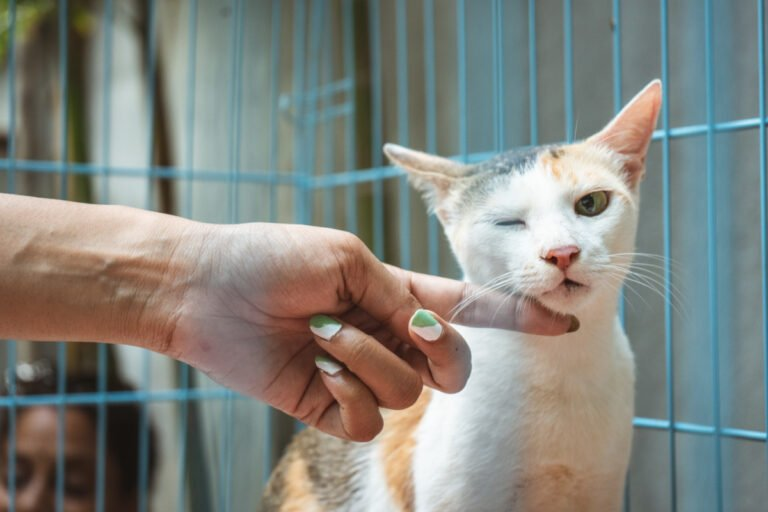 Top 20 Feline Medical Emergencies: When To Take Your Cat To The Vet